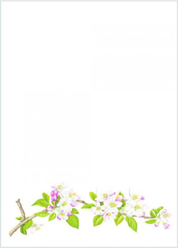 Notelet paper with Apple Blossom design