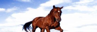 Brown Horse on Beach