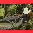 Vintage Postcard - Black Americana - 2 Alligators attacking man B1