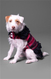 NINE WEST Fair Isle Loopy Dog Sweater Small