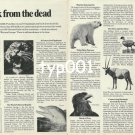WORLD WILDLIFE FUND - 1980 - BACK FROM THE DEAD PRINT AD