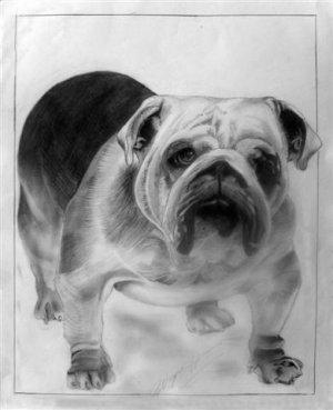 """The Bulldog (5""""x7""""/8""""x10"""")"""