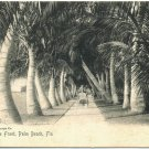 Lake Front, Palm Beach, FL c1905 Postcard