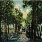 Causeway, Ormond, Florida c1909 Postcard