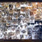 D Toys Cats 1000 pc Jigsaw Puzzle Animal Faces Collage