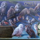 Cobble Hill Owls Of North America 1000 pc Jigsaw Puzzle Birds Raptors