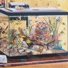 SunsOut Lori Schory Fish Tank 300 pc Jigsaw Puzzle Kittens Cats