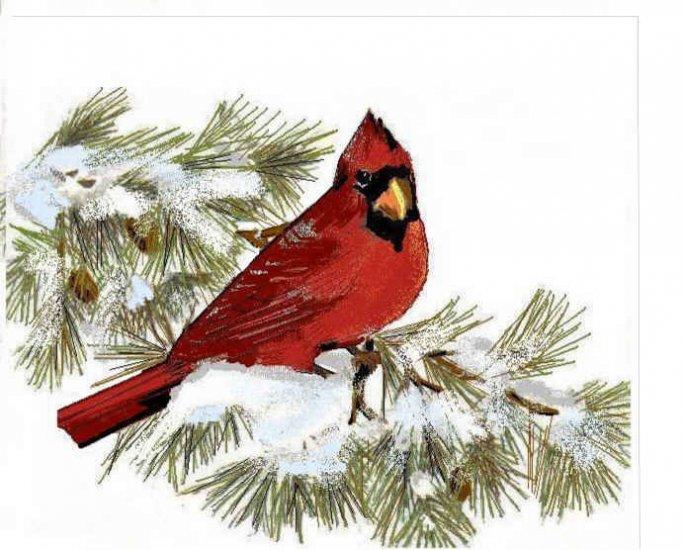 Red Cardinal on Pine Bough Greeting Card