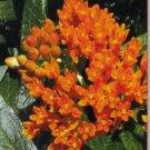 Beautiful Butterfly Weed Get Well Wishes Greeting Card