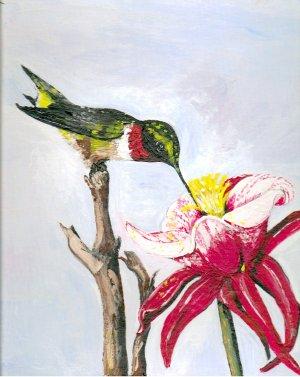 Hummingbird and Trumpet Flower
