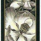 Doral 2006 Card Americas Backyard #1 Southern Magnolia