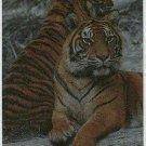 San Diego Zoo Tekchrome Chase Card Sumatran Tiger