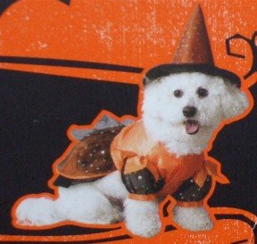 ~*~ DOG & Cat  HALLOWEEN COSTUMES outfit clothes ~*~ Pick from 37 CHOICES! NR