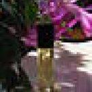 Tea Leaf and Jasmine  Fragrance Perfume Oil - 1/3 oz roll-on bottle