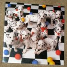 Here Spot 500 Piece Springbok Jigsaw Puzzle Puppies Dalmations Dogs Hallmark SEALED