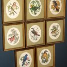 Songbirds of the World Framed Bird Prints Robin Hill Yves Beaujard Color Engravings Franklin Gallery