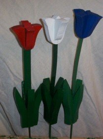 Red White and  Blue Tulips