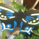 Butterfly yellow and blue trim Plant Poke