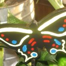 Butterfly yellow,red and blue trim Plant Poke