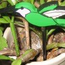 Hummingbird wood  bird  Plant Poke