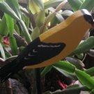 Goldfinch wood  bird  Plant Poke