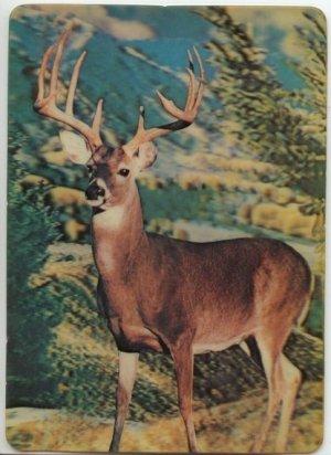 Vintage 3 D Collector Series Big Buck Postcard Post card Visual Panographics INC