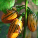Orange Aubergine Eggplant Striped Toga Solanum melongena - 20 Seeds