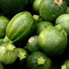 French Round Gourmet Ball Zucchini Summer Squash Ronde de Nice  - 30 Seeds