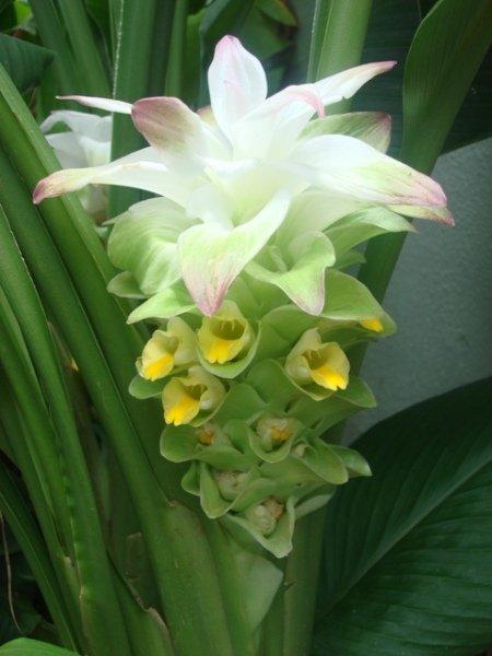 Wax Flower Arrangements
