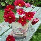 Red Cosmos 'Rubenza' Cosmos bipinnatus - 100 Seeds
