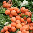 French Heirloom 'Paris Market' Tonda di Parigi Carrot Daucus carota - 150 Seeds