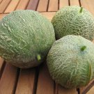 Sugar Melon Minnesota Midget Cucumis Melo - 25 Seeds