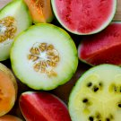 Sale! Mixed Up Melon Seeds  2 for 1 - 50 Seeds