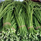 Organic Dark Green Bean Yard Long Vigna Unguiculata Sesquipedalis - 40 Seeds