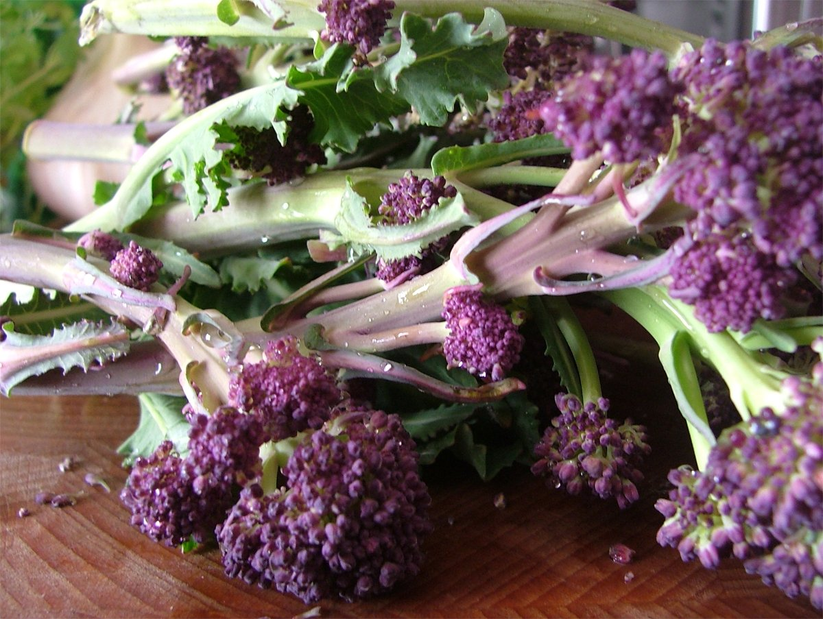 English Purple Sprouting Broccoli Early Brassica oleracea- 100 Seeds