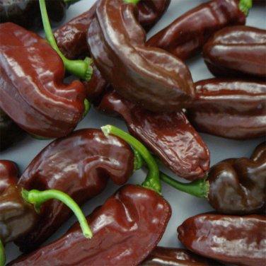 HOT! Rare Heirloom Jamaican Brown 'Chocolate Habanero' Chili Capsicum chinense - 20 Seeds