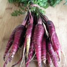 Organic Heirloom Carrot 'Purple Dragon' Daucus Carota sativus - 100 Seeds