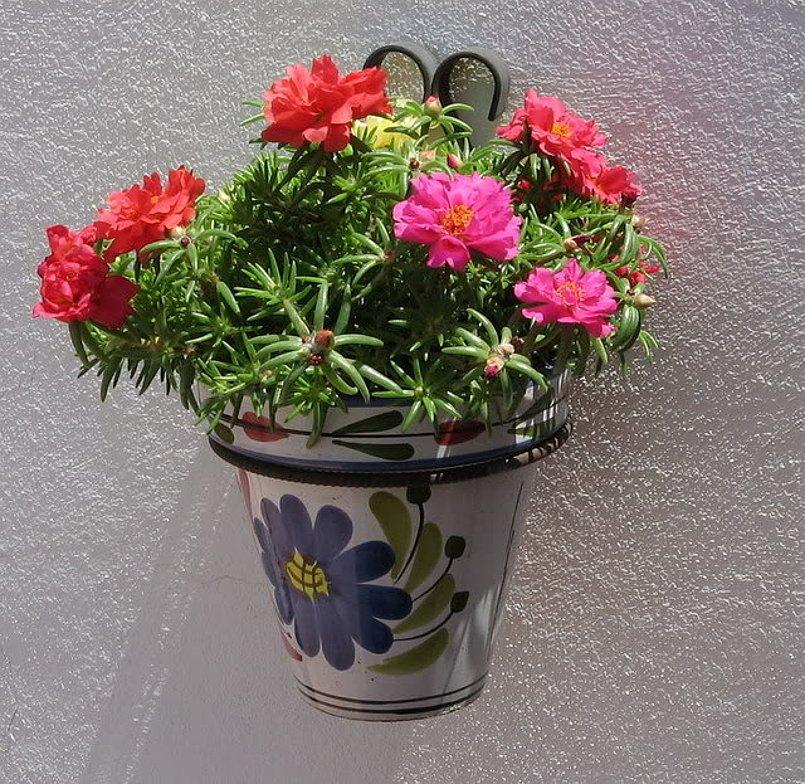 Vibrant Succulent Moss Rose Portulaca grandiflora - 100 Seeds