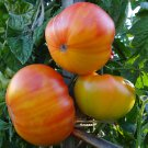 Organic Heirloom Sweet Pineapple Tomato Lycopersicon lycopersicum - 25 Seeds