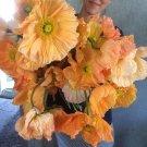 Giant Icelandic Poppy Papaver Nudicaule - 200 Seeds
