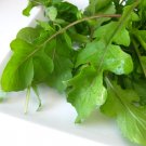 Organic Heirloom Rocket Arugula Roquette Eruca sativa - 200 Seeds