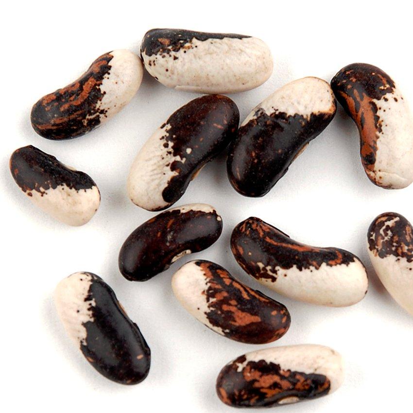 Organic Heirloom Appaloosa Bean  Phaseolus Vulgaris - 50 Seeds