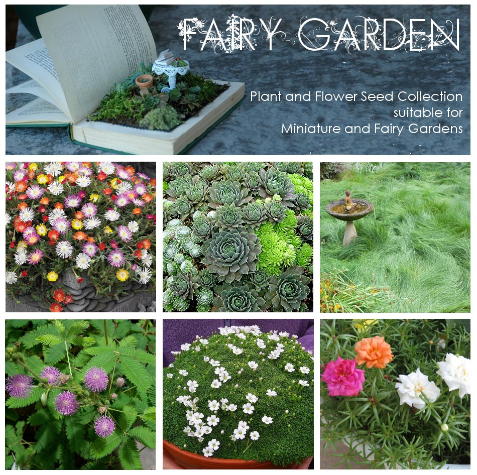Miniature and Fairy Garden Seed Collection - 6 Varieties