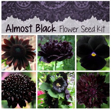 Almost Black Flower Seed Collection