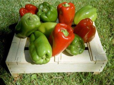 Green Red California Wonder Sweet Bell Pepper - 50 Seeds