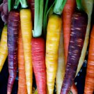 Organic OP Rainbow Carrots Daucus Carota sativus - 100 Seeds