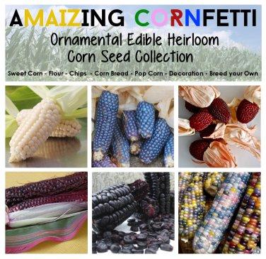 The Rare Heirloom Corn Zea Maize Collection - 6 Varieties
