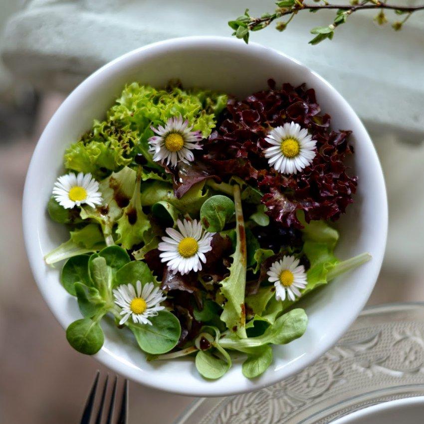 Edible Flowers Organic White Gänseblümchen Wild Miniature Daisy Single Bellis perennis - 100 Seeds