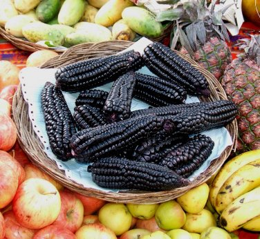 Rare Organic Heirloom Peruvian Corn Purple Maize Choclo Morado Corn Zea mays var. - 40 Seeds