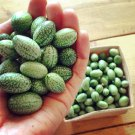 Cucamelon Mouse Melon Sandíita Melothria scabra Heirloom - 20 Seeds